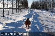 http://i97.fastpic.ru/thumb/2018/1118/6c/_f3713306299d11fb6fe7b554c80dbf6c.jpeg